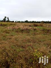 Land 5 5 Acres Bodering Elgonview Kambi Nguruwe | Land & Plots For Sale for sale in Uasin Gishu, Langas