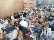 Xmas Offer 10 Weeks Old Chicks | Livestock & Poultry for sale in Kiambu, Kabete