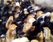 Improved Kienyeji Chicks | Livestock & Poultry for sale in Meru, Municipality