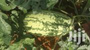 Fresh Watermelons In The Farm | Feeds, Supplements & Seeds for sale in Nairobi, Mathare North