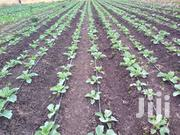 1/2 With Borehole, Drip Irrigation System & Solar Pumping System.   Land & Plots For Sale for sale in Machakos, Matungulu West