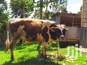 Bull Asher Breed | Other Animals for sale in Kiambu, Gitaru