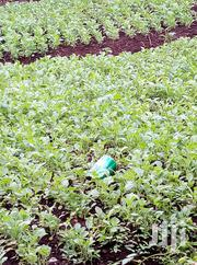 Sukuma Wiki Tutor | Feeds, Supplements & Seeds for sale in Nakuru, Kabazi