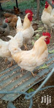 Kienyeji Chicken For Sell Both Jogoos And Chicken | Livestock & Poultry for sale in Baringo, Marigat
