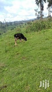 Cow For Sale | Other Animals for sale in Kiambu, Nyanduma