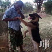 Dog Training | Pet Services for sale in Nairobi, Mugumo-Ini (Langata)