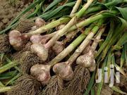Treated Garlic Seeds | Feeds, Supplements & Seeds for sale in Nyeri, Rware