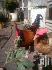 Training Of Keeping Improved Kienyeji Chicken | Classes & Courses for sale in Mombasa, Bamburi