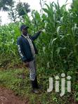 4acres For Sale In Kirinyaga Mwea Kimbimbi Area | Land & Plots For Sale for sale in Nyangati, Kirinyaga, Kenya