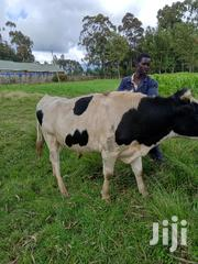 Fresian Bull For Sale | Livestock & Poultry for sale in Nyandarua, Magumu