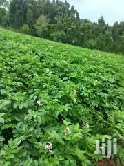 High Quality Shangi Potatoes And Seeds | Feeds, Supplements & Seeds for sale in Nyandarua, Mirangine