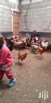 Inatia Poultry Farming Ltd | Livestock & Poultry for sale in Machakos, Athi River