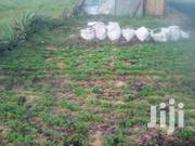 Fresh Dhania | Feeds, Supplements & Seeds for sale in Machakos, Syokimau/Mulolongo