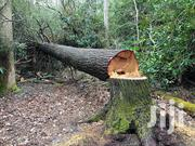 Tree Falling Services At Your Door | Other Services for sale in Uasin Gishu, Kaptagat