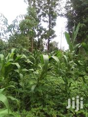 Land for Sale | Land & Plots For Sale for sale in Embu, Mbeti North
