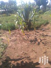 Full Plots On Sale Along Nairobi-malaba Highway At Bukembe Market. | Land & Plots For Sale for sale in Bungoma, Bukembe East