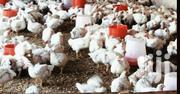 Broiler Chicken For Sale. | Livestock & Poultry for sale in Mombasa, Shanzu