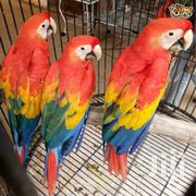 Super Super Tame Baby Scarlet Macaw | Birds for sale in West Pokot, Mnagei