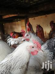 Improved Jogoo 2.8kg To 4.2kg | Birds for sale in Nyeri, Karatina Town