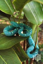Snakes Control Services | Other Services for sale in Nairobi, Lavington