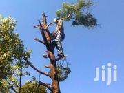 Affordable Tree Felling/Tree Cutting/Trimming/Site Clearing Services | Other Services for sale in Nairobi, Mountain View