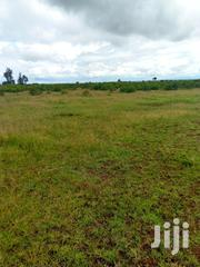 5 Acres on Sales | Land & Plots For Sale for sale in Laikipia, Rumuruti Township