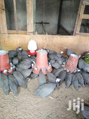 Guinea Fowls | Livestock & Poultry for sale in Nairobi, Ruai
