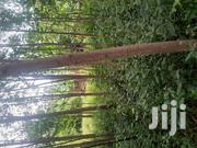 Two Plots for Sale   Land & Plots For Sale for sale in Busia, Marachi East
