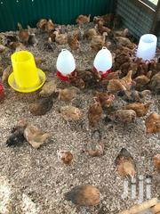 Kienyeji Chicken | Livestock & Poultry for sale in Homa Bay, Central Karachuonyo