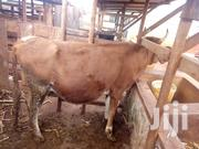 Ready To Serve U | Other Animals for sale in Murang'a, Wangu