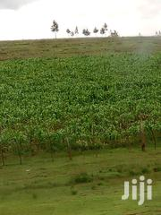 Land Prime Good for Farming 72 Acres Soy Chemoset Title 1.4m Per Acre | Land & Plots For Sale for sale in Uasin Gishu, Langas