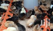 4 Days Healthy Improved Kienyeji Chicks | Livestock & Poultry for sale in Nairobi, Komarock