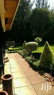 Best Landscappers And Gardeners For Event And Beatification | Landscaping & Gardening Services for sale in Nairobi, Karen