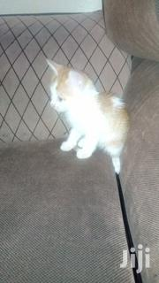 Baby Male Mixed Breed Mongrel (No Breed) | Cats & Kittens for sale in Nairobi, Umoja II