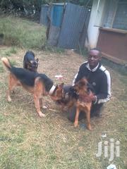 Excellent Dog Trainer Available | Pet Services for sale in Machakos, Machakos Central