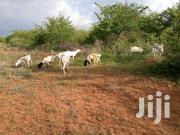 4 & 28.6 Acres For Sale In Makindu At 200k Per Acre By Swift-gps Ltd | Land & Plots For Sale for sale in Makueni, Makindu