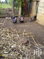 Mature Turkeys | Livestock & Poultry for sale in Nakuru, Bahati