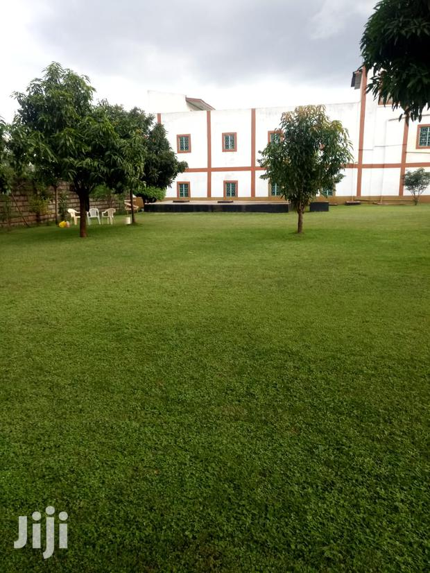 Archive: Excellent Land Scaping Services At Affordable Price Anywhere In Kenya.