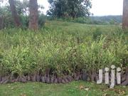 Trees Seedlings | Feeds, Supplements & Seeds for sale in Nakuru, Biashara (Naivasha)
