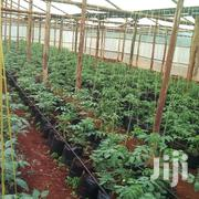 Horticulture Farming | Building & Trades Services for sale in Kakamega, Likuyani