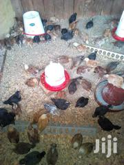 Layers And Kienyeji Chicken | Livestock & Poultry for sale in Elgeyo-Marakwet, Chepkorio