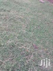 Narok Town Prime Plot 50 × 100  On Sale | Land & Plots For Sale for sale in Busia, Bunyala West (Budalangi)