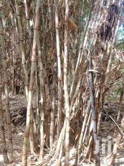 Bamboo | Building Materials for sale in Embu, Mbeti North
