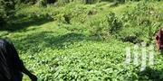 Lands on Sale in Mathira | Land & Plots For Sale for sale in Nyeri, Ruring'U