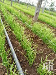 Onions Seedlings Available | Feeds, Supplements & Seeds for sale in Kiambu, Thika