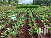 Kitchen Garden Drip Irrigation Kit | Farm Machinery & Equipment for sale in Uasin Gishu, Langas