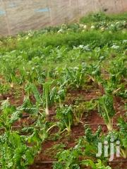 100 X 100 Plot With Title Deed At Mugumo Daiga Estate | Land & Plots For Sale for sale in Laikipia, Umande
