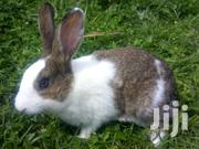 Happy Rabbit Farm | Livestock & Poultry for sale in Murang'a, Gatanga