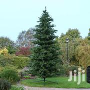 12ft Christmas Tree 4500 Tips | Home Accessories for sale in Nairobi, Nairobi Central