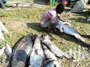 Online Fish Consultancy Platform..... | Fish for sale in Nairobi, Harambee